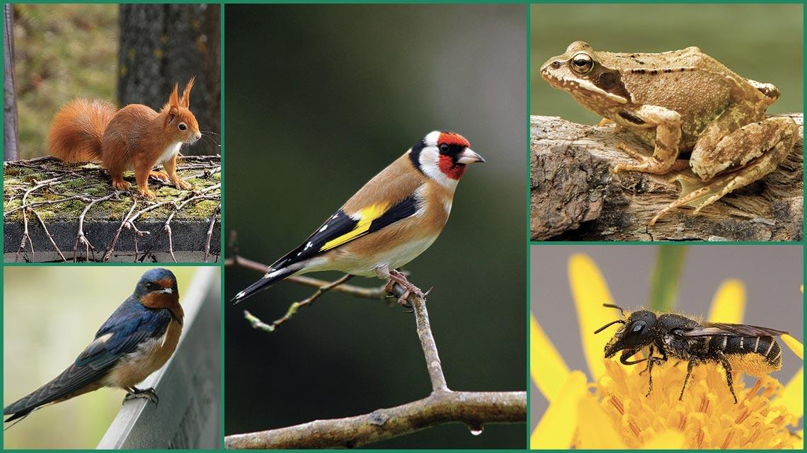 Rencontres de la biodiversité Douaisienne